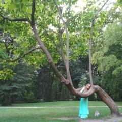 Jak wygiąć drzewo jedną ręką ;-P
